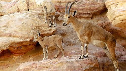 الحياة البرية في محمية وادي دجلة