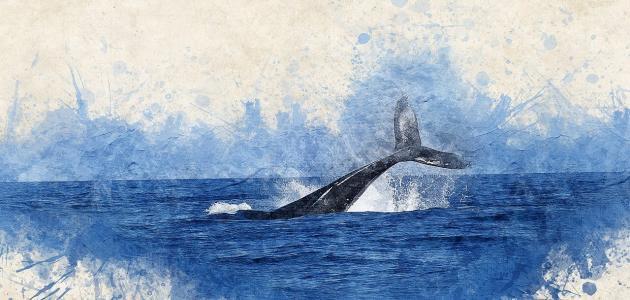 قصة سيدنا يونس في بطن الحوت