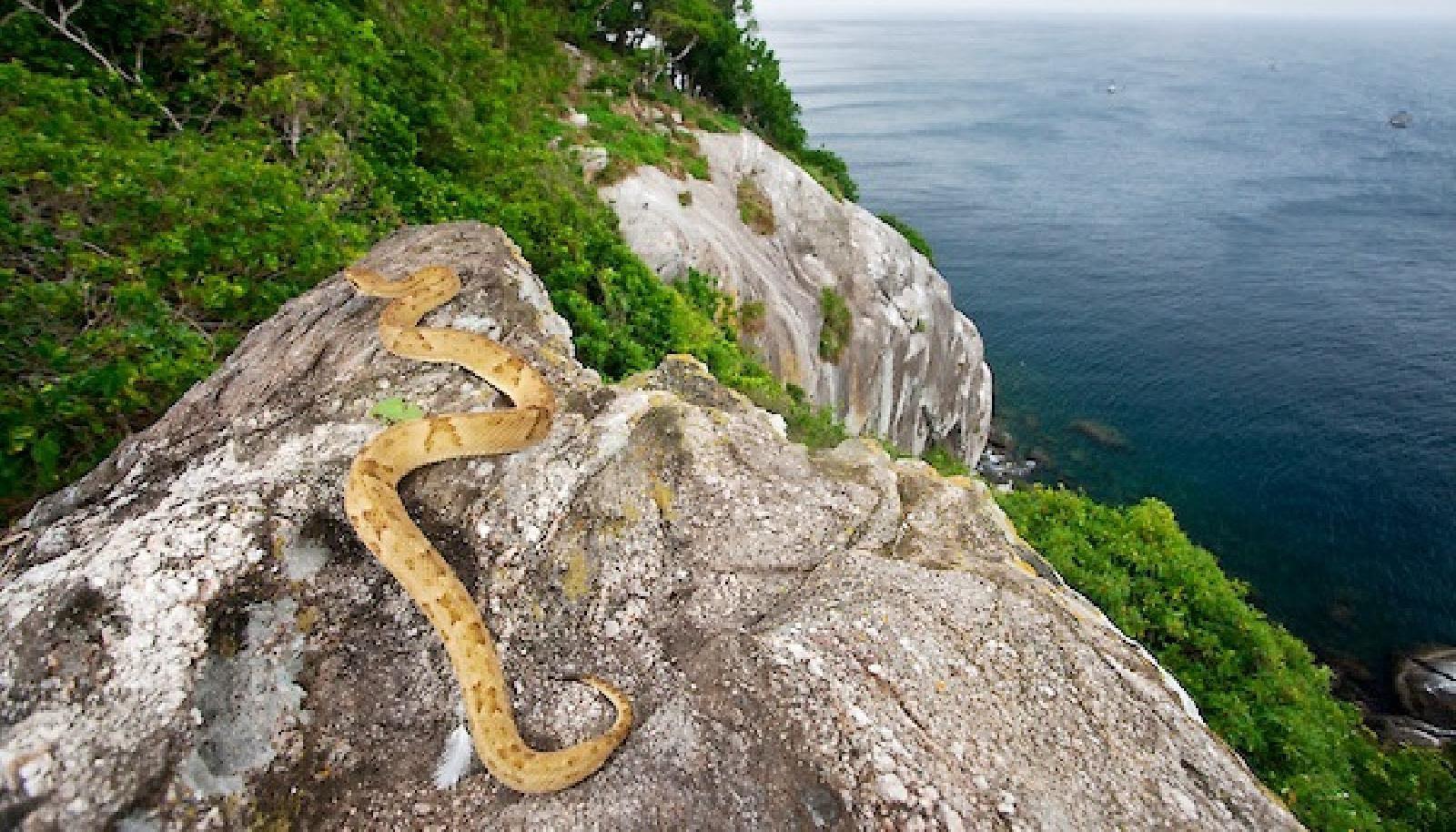 جزيرة الأفاعي أخطر جزيرة في العالم