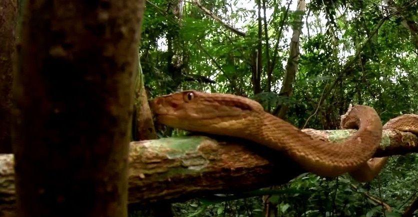 خطر ثعابين جزيرة الأفاعي وغذائها