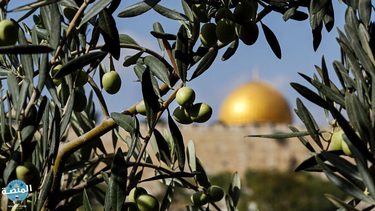 مناخ فلسطين