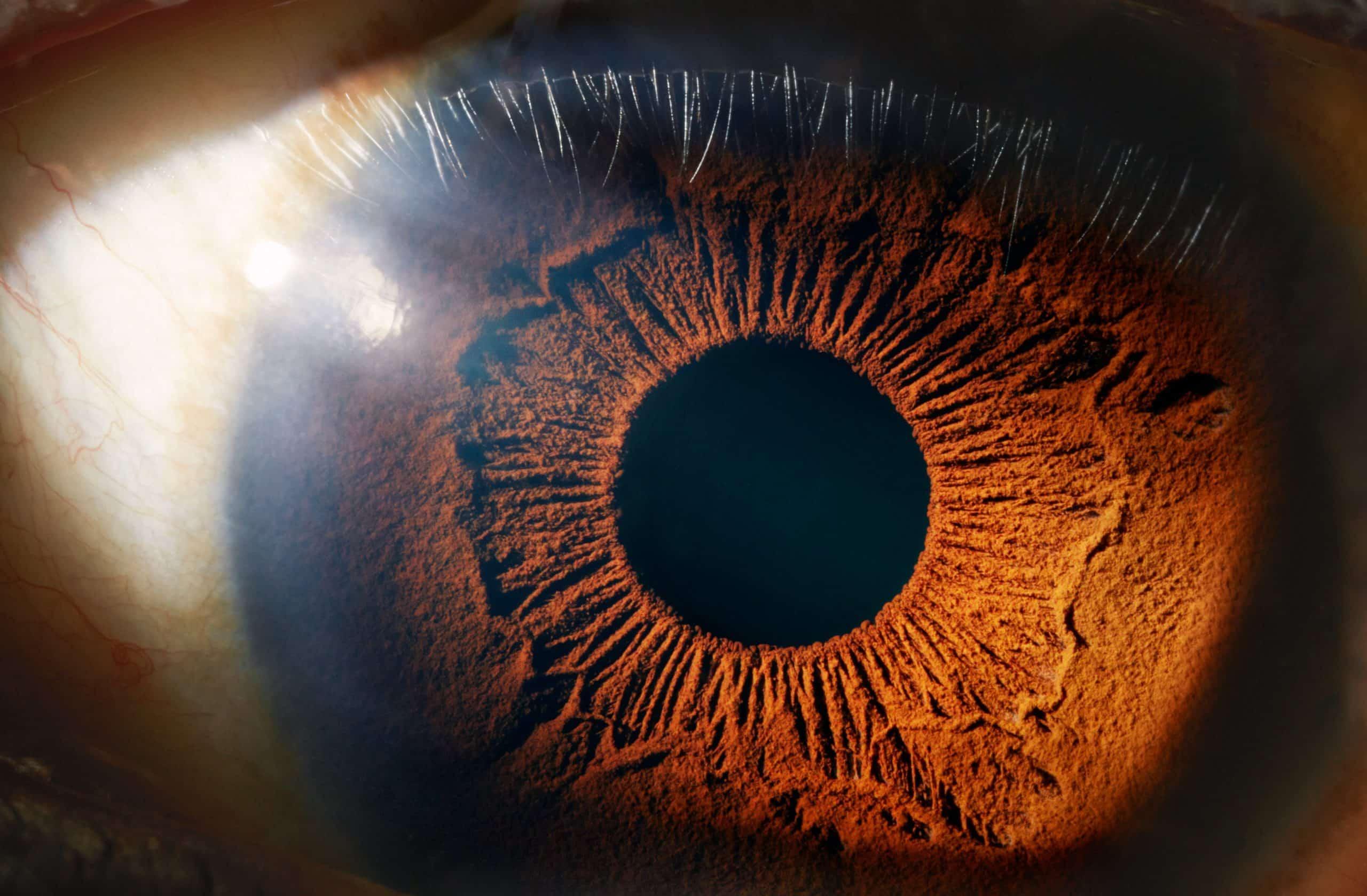 كيف تعمل العين