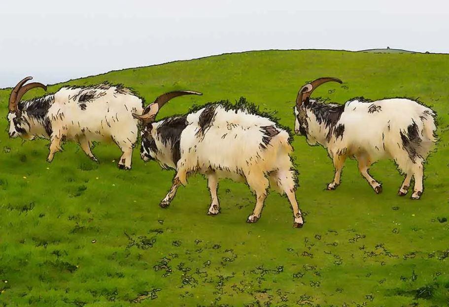 قصة الماعز الثلاثة