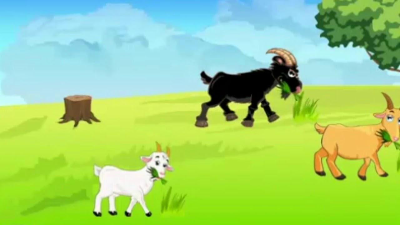 حدوتة الماعز الثلاثة